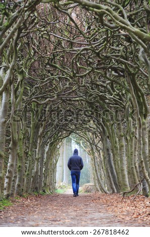 Man alone walking in a tunnel of trees on a foggy, spring morning. Melancholy emotions concept. - stock photo