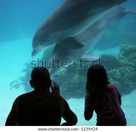 man and girl watching dolphins