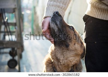 Man and his German Shepherd dog - stock photo