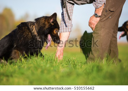 man and his German Shepherd dog on the field