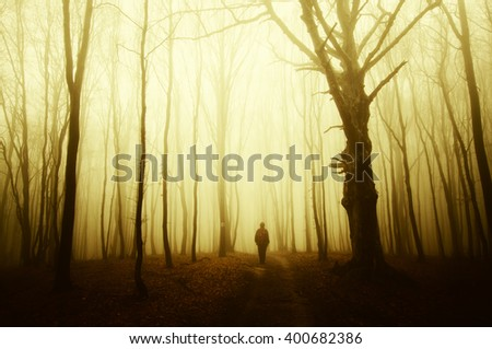 man and old tree in forest at sunset - stock photo