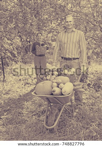 Man and woman  with  harvest  in  vegetables garden