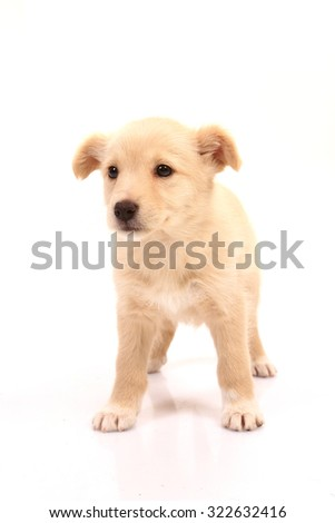 man best friend, beautiful dog - stock photo