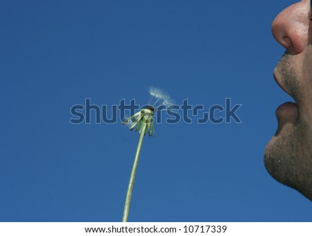 man blowing dandelion on a blue sky as a background