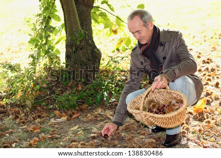 Man collecting chestnuts - stock photo