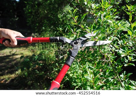 man cuts bush with scissors in the garden