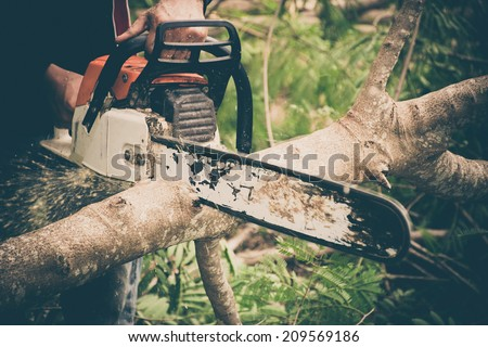 Man cuts tree with chainsaw. Thailand. - stock photo