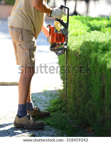 Man cutting hedge