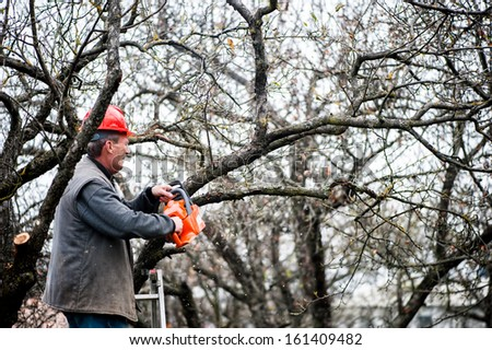 man cutting wood from trees with electrical chainsaw and ladder - stock photo