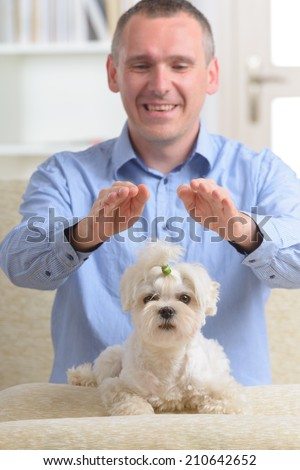 Man doing Reiki therapy for a dog, a kind of energy medicine. - stock photo