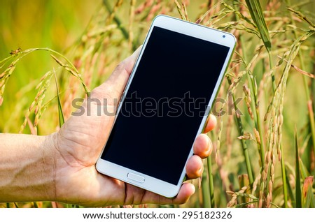Man hand holding smartphone against on nature of rice background soft focus. - stock photo