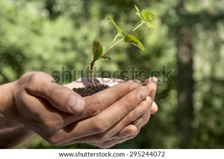 man hands holding a green sprout on earth