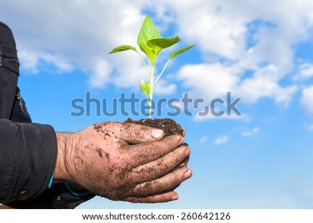 Man hands holding a green young plant. Symbol of spring and ecology concept
