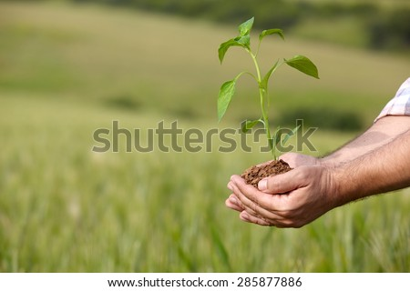 Man hands holding a plant. ecology concept