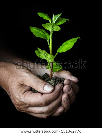man hands with a little tree