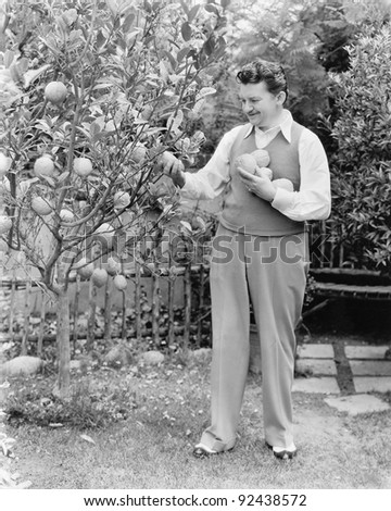 Man harvesting oranges from his tree