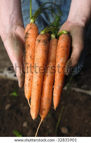 man holding carrots in the garden - stock photo