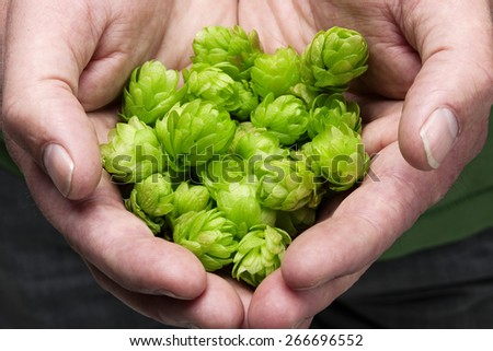 Man holding fresh hop in his hands