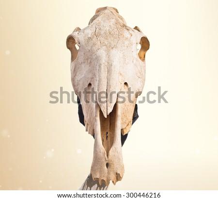 Man holding horse skull over ocher background - stock photo