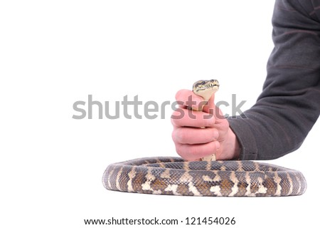 Man holding snake in the hand - stock photo