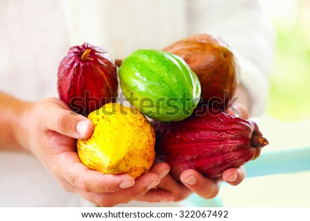 man holding the different sorts of colorful cocoa pods in hands - stock photo