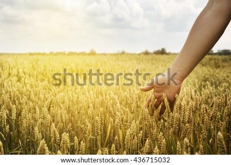 Man in beautiful wheat field with sunlight - stock photo