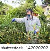 Man in face mask and gloves spraying insecticide on his tomato plants during a bad insect pest infestation. - stock photo