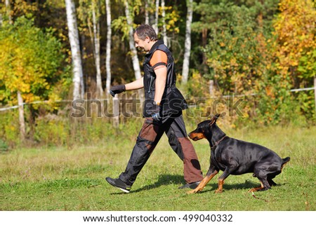Man is dog trainer with doberman pinscher going on grass on autumn day