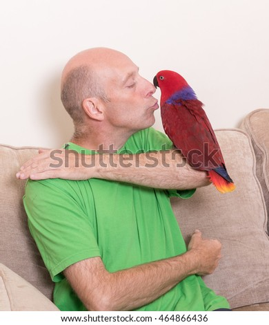 Man kissing a tame red Eclectus parrot sat on his arm