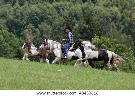 Man on horse running with two foals - stock photo