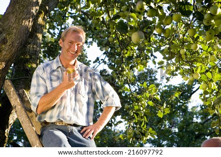 Man on ladder with apple in orchard, smiling, portrait, low angle view - stock photo