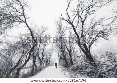 man on path with spooky trees in winter - stock photo