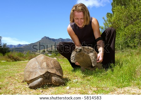 Man plays with two giant turtles - and misty majestic mountains as a background. Shot in Jan Marais nature reserve, Stellenbosch, Western Cape, South Africa.