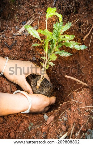 Man puts a plant in the earth