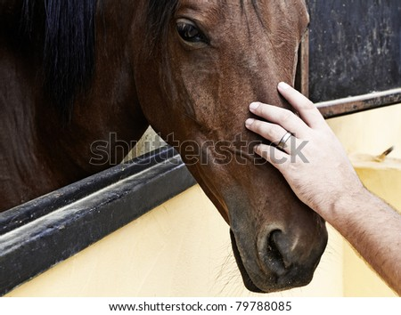 man's hand stroking horse head standing in a stable - stock photo