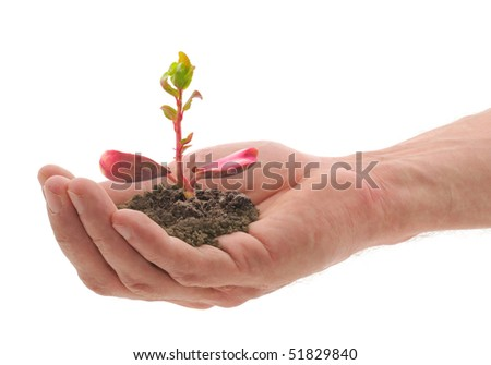 man's hand which holds a sprout - stock photo