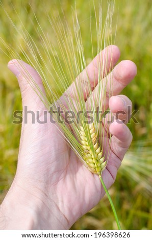 Man's hand with wheat herb