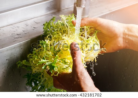 Man's hands wash frisee. Frisee under water flow. Organic food in cafe kitchen. Taste the freshness.