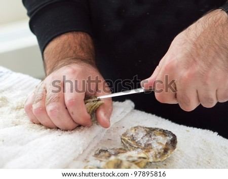 man shucking an oyster with a knife closeup with hands - stock photo
