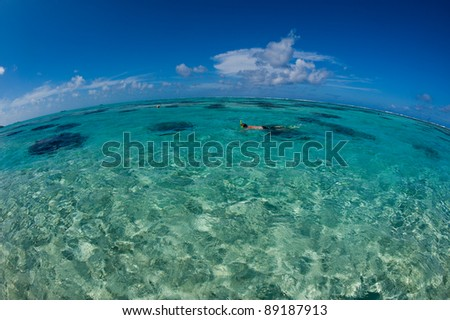 Man snorkeling in the crystal clear ocean, Bora Bora, Tahiti, French Polynesia.