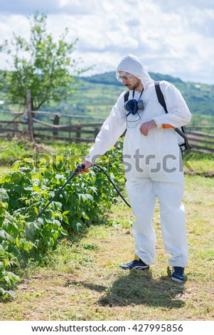 Man spraying chemicals on his raspberry field,colored photo