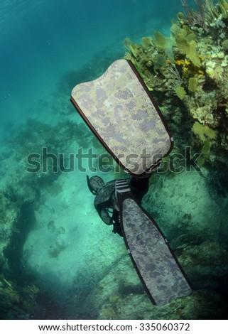Man swimming down in ocean using diving fins - stock photo
