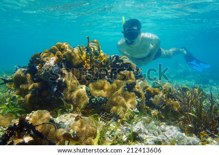 man underwater snorkeling in shallow water and looks tropical sea life - stock photo