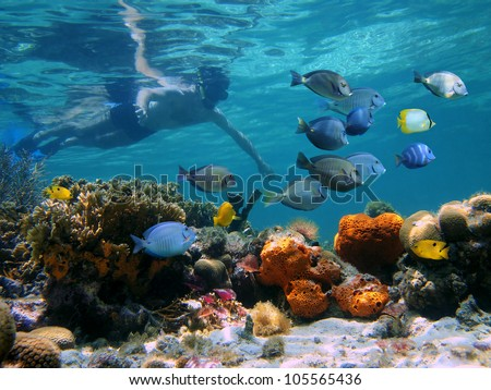 Man underwater snorkeling on a colorful coral reef with school of tropical fish