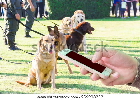 Man use mobile phone, blur image of police dogs as background.