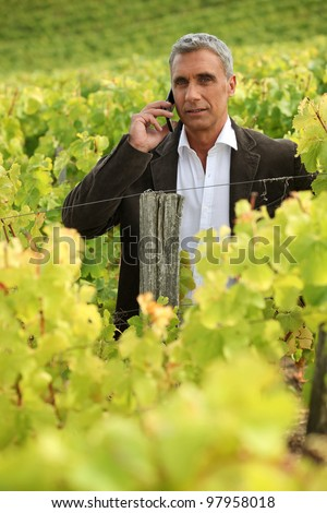 Man using a phone in a vineyard
