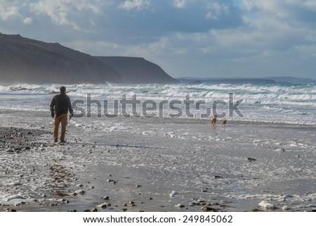 Man walking dogs on the beach - stock photo