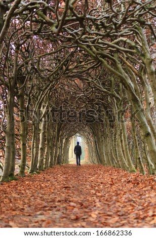 Man walking in a tunnel of trees on a hazy day in autumn. - stock photo