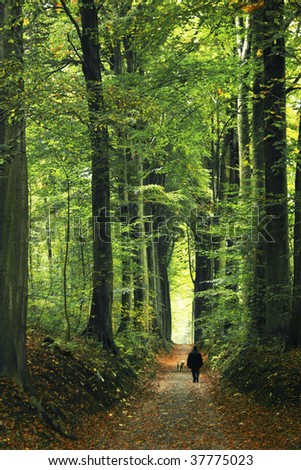 man walking in the green  forest allay