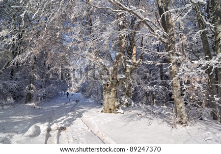 Man walking in the snowy winter forest